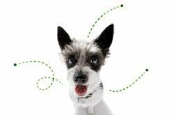 ペットを飼う前に病院でペットアレルギーの有無を調べる