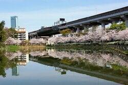 田辺駅周辺の桃ケ池公園