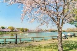 北区の浮間公園の桜